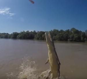 coccodrillo salta completamente fuori da acqua