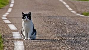 Verona: spara al gatto poi lo calpesta e finisce a bastonate