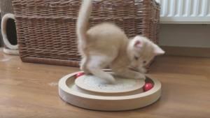 cucciolo di gatto Dadel, primo giorno a casa