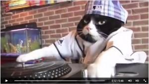 """VIDEO YOUTUBE """"Dj Kitty"""": il gatto dj da 17 milioni di clic"""