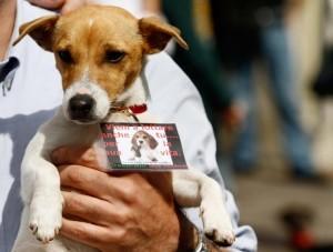 Green Hill, liberano beagle: rischiano 4 anni di carcere
