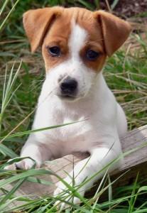 Cindy, cagnolina salva dopo 4 giorni sotto le macerie