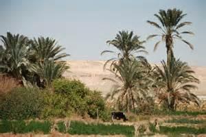 L' oasi di Bahariya
