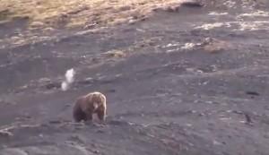 VIDEO YouTube - Orso ucciso, cacciatori filmano e ridono