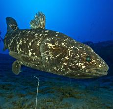Pesci coi polmoni, c'erano già 400 milioni di anni fa