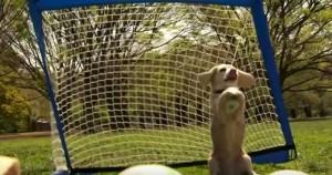 Purin, il beagle che para 14 rigori, è record