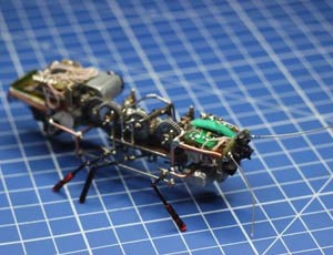 """Russia: creato scarafaggio robot, """"spia"""" per intelligence"""