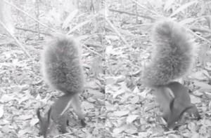 VIDEO YOUTUBE - Scoiattolo vampiro mangia un pezzo di cervo