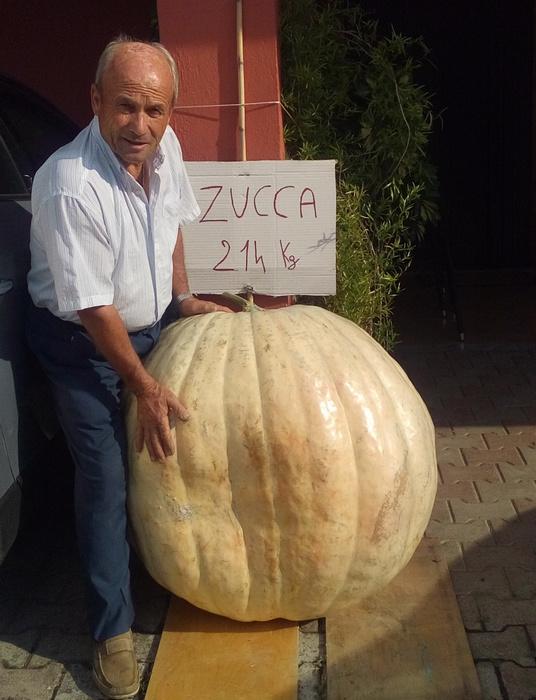 Benevento, zucca da record da 214 chili