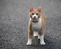 """Gatto investito su asfalto. Vigili: """"Soccorso solo ai cani"""""""