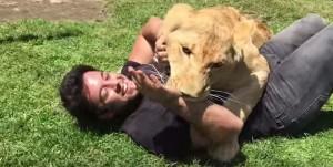 """leonessa riempie di coccole il """"papà adottivo"""""""