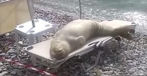 leone marino si sdraia sul lettino in spiaggia