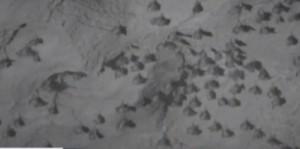 Pipistrelli minacciati in Nicaragua per colpa dell'eolico
