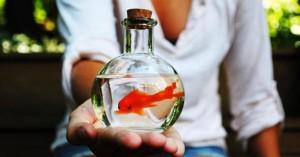 Pesci rossi come bomboniere: una petizione per fermarli