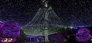 L'albero di Natale record