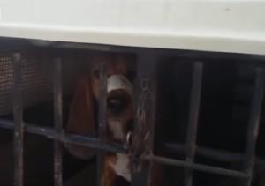 VIDEO YOUTUBE Roma, cane in gabbia col muso legato