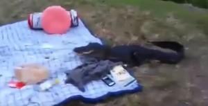 Florida, alligatore ruba il panino al picnic