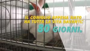 YOUTUBE. Breve vita conigli: 80 giorni in galera e...tavola