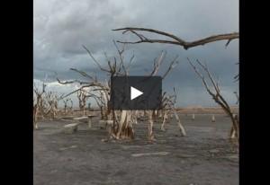 VIDEO Epecuen, villaggio sommerso torna in superficie