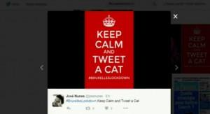 """#BrusselsLockdown, social silenziosi: con gatti la """"censura"""""""