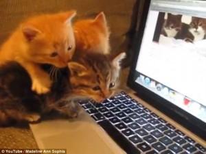 VIDEO YOUTUBE Gatti guardano gatti su pc e reagiscono così