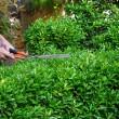 Patentino e 20 ore di corso per curare piante: legge Ue…