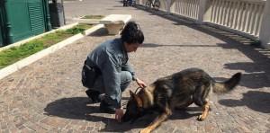 Hank e Kira, cani anti-droga a spasso per le vie di Nettuno