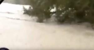 YOUTUBE Intervista su albero, si era salvato da alluvione...