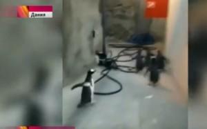 """Come""""Madagascar"""": gruppo pinguini tenta fuga da zoo"""