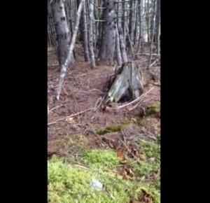"""YOUTUBE Mistero Terra che """"respira"""": nel bosco si vede..."""