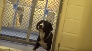 Cane adottato lascia canile: la prima passeggiata