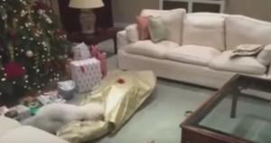 Cane scarta il regalo di Natale e trova