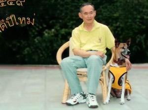 Thailandia, insulta cane del Re: rischia 37 anni di carcere