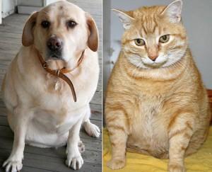 Guarda la versione ingrandita di Cani e gatti di casa, Equitalia non può più pignorarli