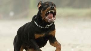 Venezia, aizza cane contro Polizia: senegalese arrestato