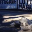 """YOUTUBE Lazio, sacchi di letame a Formello: """"Lotito magna.."""""""