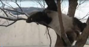 Cina, i panda giganti scoprono la neve VIDEO