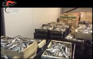 YOUTUBE Cenone col pesce tarocco: sequestrate 10 tonnellate