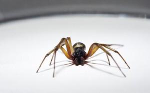 """Ragni, pidocchi, scarafaggi: """"clandestini"""" nelle nostre case"""