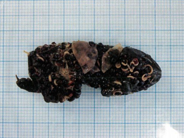 Ordina un'insalata e trova dentro una rana decomposta FOTO