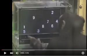 Video YOUTUBE Ayumu, lo scimpanzé più intelligente dell'uomo