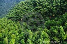 Una foresta nel Sichuan