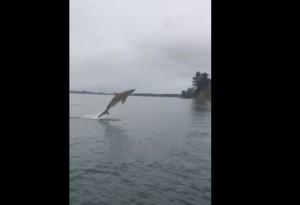 Squalo abbocca all'amo: VIDEO lotta col pescatore