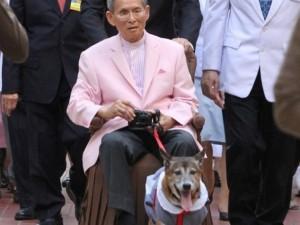 Thailandia: morto Tongdaeng, cane re. Vietato insultarlo...