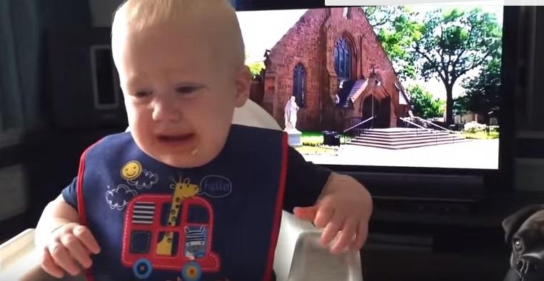 YOUTUBE Boxer mangia il biscotto, la reazione del bimbo2