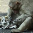Cane adottato dal macaco. In cerca di cibo insieme