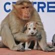 Cane adottato dal macaco. In cerca di cibo insieme8