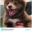 Cane o orso La FOTO misteriosa pubblica sul web