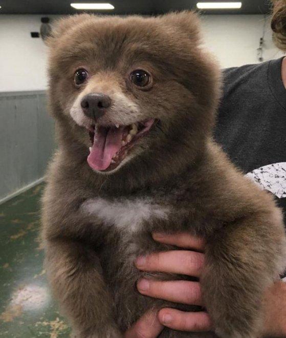 Cane o orso La FOTO misteriosa pubblica sul web 1