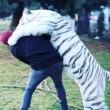 "Lewis Hamilton ""abbraccia"" tigre bianca in Messico2"